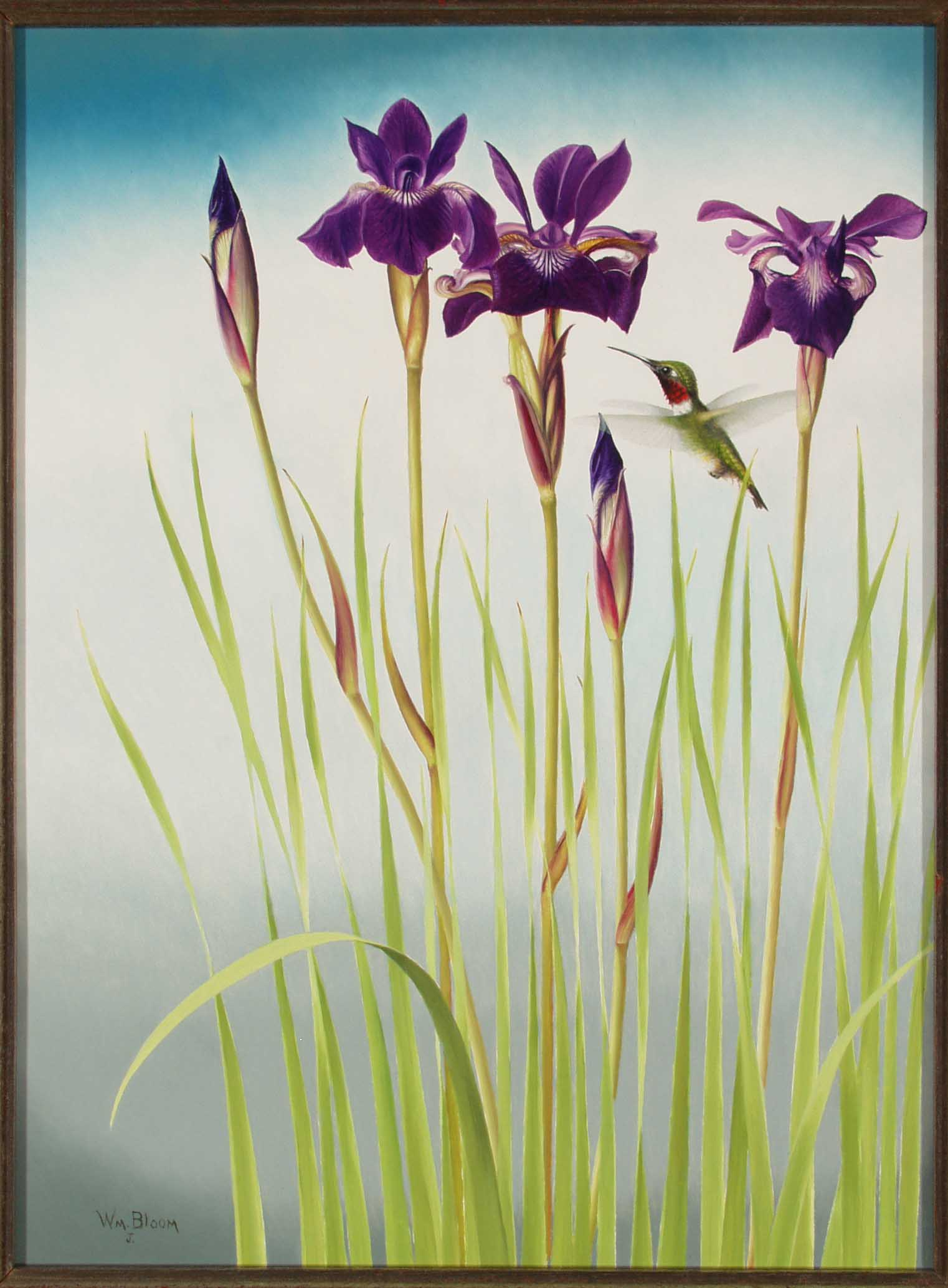 """June's Siberian Iris"" William Bloom Opens in new window"